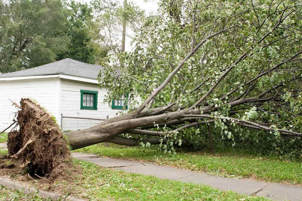 Storm & Emergency Response