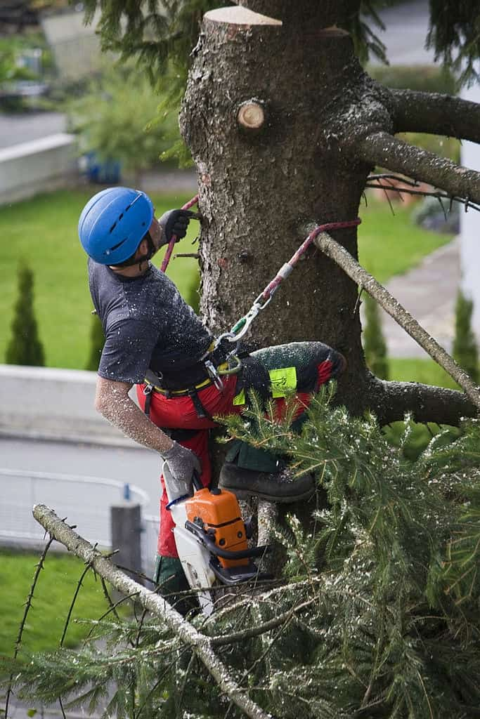 Tree Lopping Experts Cairns