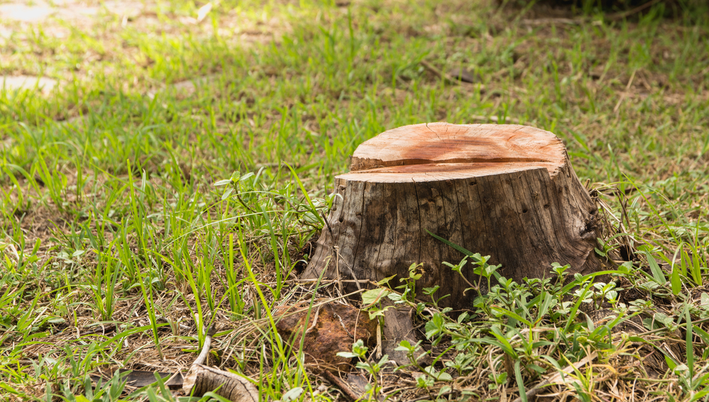 The Best Time for Tree and Stump Removal