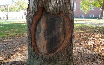 How Do Trees Heal Their Own Wounds?