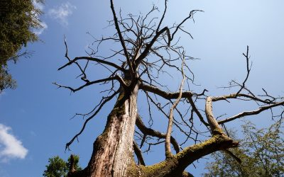 Top Factors That Lead to a Tree's Death