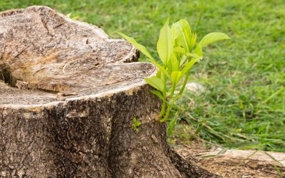 What Should You Plant After Removing a Tree?