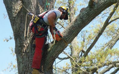 Why You Should Rethink Do-It-Yourself Tree Care
