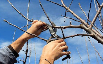 Pruning Tips And Guide: The Importance Of Tree Pruning