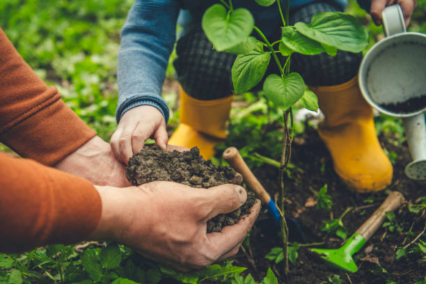 How to Take Care of a Newly Planted Tree