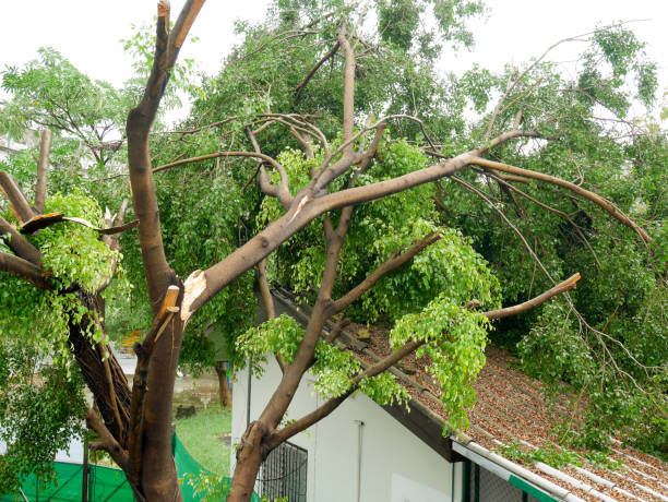 What To Do About Trees Survived After The Storm Passes