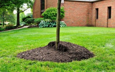 A Complete Guide Of Mulching Around Your Trees