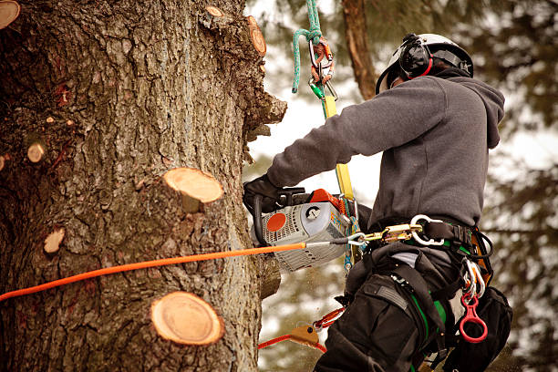 Tree Trimming Costs & Prices: Tree Trimming Calculator
