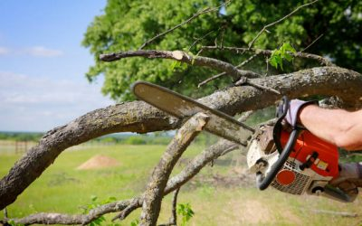 Choosing The Right Tree Removal Service Providers