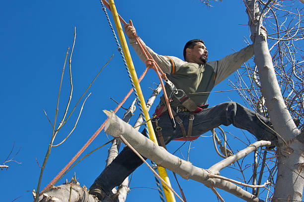 The Benefits: Hiring A Professional Tree Trimming Services