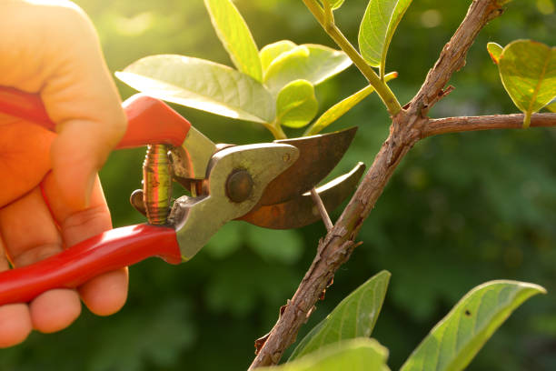 A Complete Guide For Tree Care And Cutting