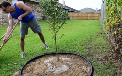 Basics on Tree Fertilization: WHAT, WHEN AND WHY?