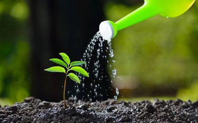 You Need to Know About Growing Trees From Seeds