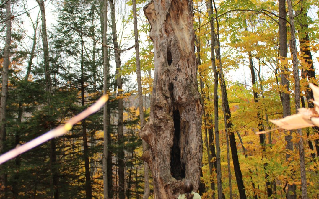 How Long Will A Dead Tree Stay Standing?