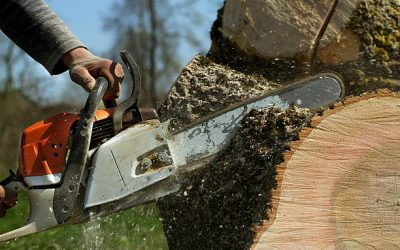 Hiring a Tree Service: How They Actually Work?