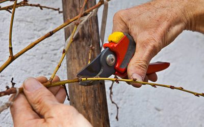 Care Your Tree On Winter Season In Professional Way