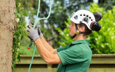 Tree's Safety: How to Inspect the Health of a Tree