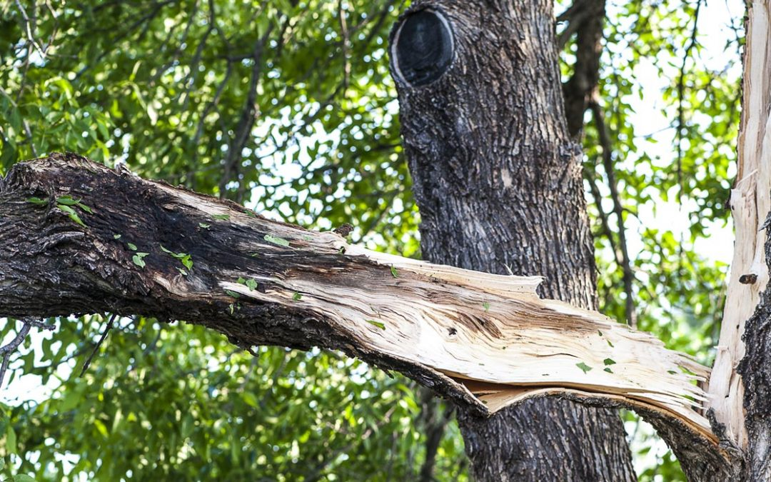 Storm Damaged Trees Need Proper Pruning