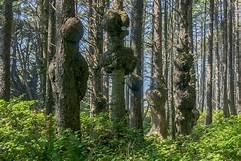 How To Identify Tree Burl: Controlling A Tree Burl