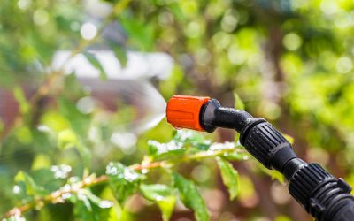 Identifying And Preventing Spring Pests