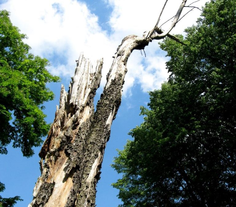 Pros And Cons: Removing Your Backyard Tree