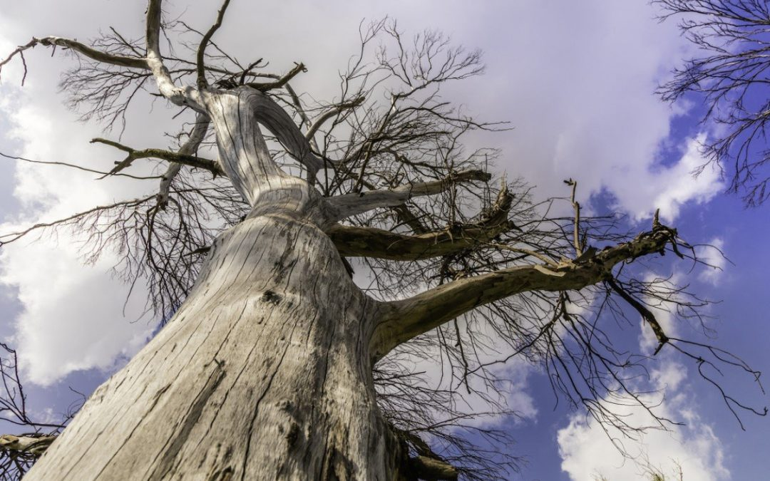 Why Did My Tree Suddenly Die: Reasons For Sudden Tree Death