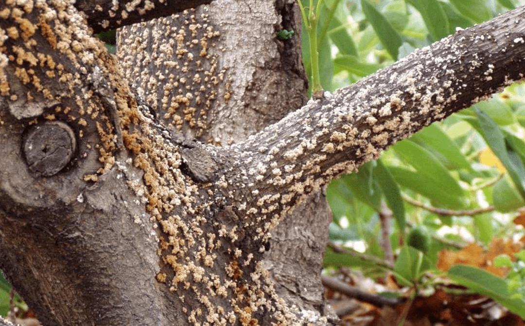 Identifying Common Hardwood Tree Diseases